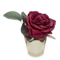 mini rosa roja en maceta