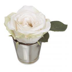 mini rosa blanca en maceta