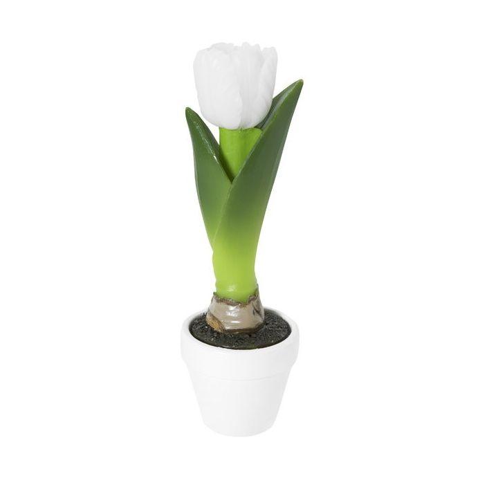 vela en caja tulipán blanco